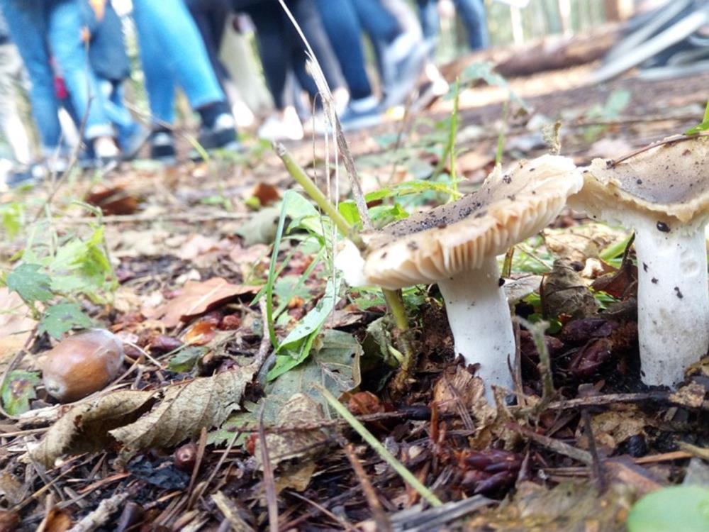 Excursie voor 4 Wet - Natuurcentrum Beisbroek