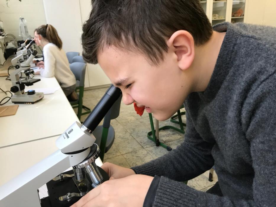 Microscopie in het 1 ste jaar